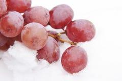 Rote Trauben im Schnee Stockfotografie