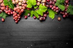 Rote Trauben mit Blättern Lizenzfreie Stockfotos