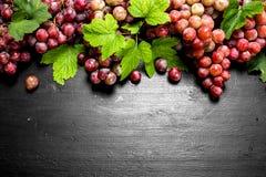 Rote Trauben mit Blättern Stockfotografie