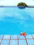 Rote tropische Blume, blaues Pool Stockbild