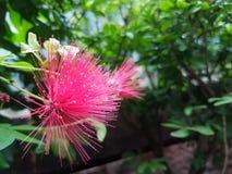 Rote tropische Blumen Stockfotos