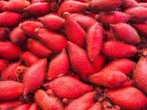 Rote tropische Frucht Salacca oder zalacca Lizenzfreie Stockbilder