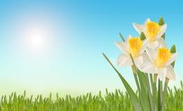 Rote Tulpe und farbige Eier Lizenzfreie Stockfotos