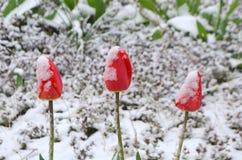 Rote Tulpe unter dem Schnee Stockbild