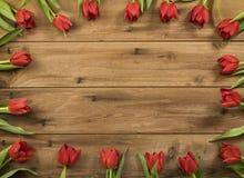rote Tulpegrenze stockfotos
