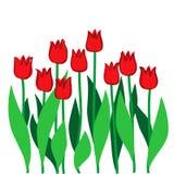 Rote Tulpen Stockbild