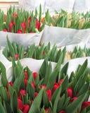 Rote Tulpen in Amsterdam Stockfotos