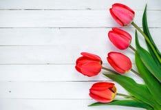rote Tulpen auf einem weißen Hintergrund Stockbild