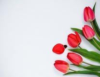 rote Tulpen auf einem weißen Hintergrund Lizenzfreie Stockfotografie