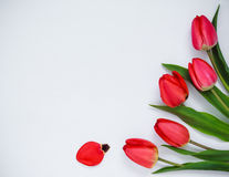 rote Tulpen auf einem weißen Hintergrund Stockfotografie