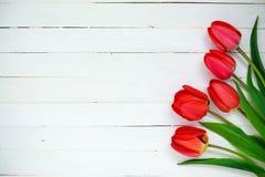 rote Tulpen auf einem weißen Hintergrund Lizenzfreie Stockfotos