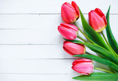rote Tulpen auf einem weißen Hintergrund Stockbilder