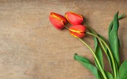 Rote Tulpen auf hölzernem Hintergrund Stockbilder