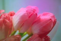 Rote Tulpen blühen auf colorfulbackground Gr?nes Blatt mit einem gro?en Wassertropfen lizenzfreie stockbilder