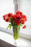 Rote Tulpen in einem Glasvase auf dem Fensterbrett Stockbilder