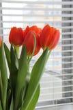 Tulpen im Fenster Stockfoto