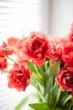 Rote Tulpen Makro Stockbild