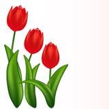 Rote Tulpen. Steigungineinander greifen. lizenzfreie abbildung