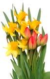 Rote Tulpen und gelbe Narzisse Lizenzfreies Stockfoto