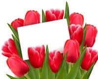 Rote Tulpen und Leerzeichen der Karte Lizenzfreie Stockbilder