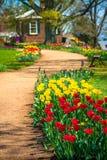 Rote u. gelbe Tulpen auf Weg stockbild
