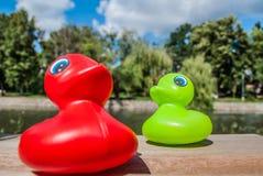 Rote u. grüne Ente lizenzfreie stockfotos