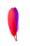 Rote und blaue Federn Stockbild
