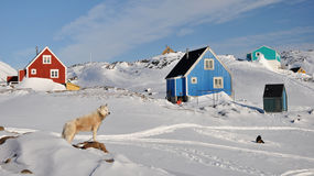 Rote und blaue Kabinen und Hund im Winter, Grönland Lizenzfreie Stockfotografie
