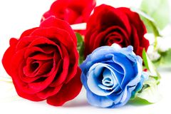 Rote und blaue Rosen Stockfoto