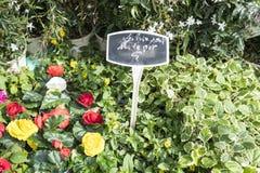 Rote und gelbe blühende Blumentöpfe in einem Markt in Paris, Frankreich lizenzfreie stockfotografie