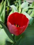 Rote und gelbe Blume Lizenzfreie Stockbilder