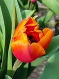 Rote und gelbe Blume Lizenzfreie Stockfotografie