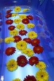 Rote und gelbe Blumen Stockbild