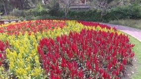 Rote und gelbe Blumen stock footage