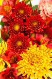 Rote und gelbe Blumen schließen oben Stockbild