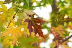 Rote und gelbe Herbstblätter Stockbild