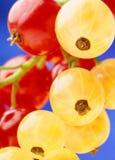 Rote und gelbe Korinthe Stockfotos