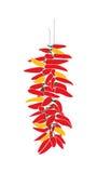 Rote und gelbe Paprika auf Seil Lizenzfreie Stockbilder