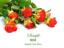 Rote und gelbe Rosebuds mit copyspace Stockfoto