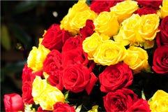 Rote und gelbe Rosen Stockfotografie