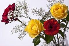 Rote und gelbe Rosen auf weißem Hintergrund Stockbild