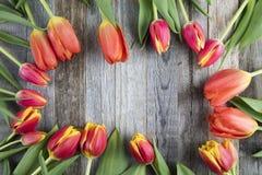 Rote und gelbe Tulip Frames stockbild