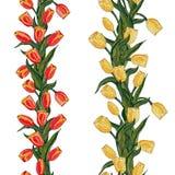 Rote und gelbe Tulpe nahtlosen Mit Blumenwhit Muster des Vektors vektor abbildung