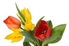 Rote und gelbe Tulpen Lizenzfreies Stockfoto