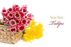 Rote und gelbe Tulpen in einem Korb Lizenzfreie Stockbilder