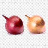 Rote und gelbe Zwiebel der ganzen Birne Lizenzfreie Stockfotos