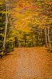 Rote und goldene Blätter Hang On Over Narrow Lane Stockbild