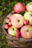 Rote und grüne Äpfel Stockfoto