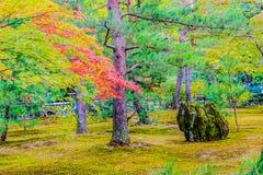 Rote und grüne Farbändern von Ahornblättern im moosigen Garten Stockfotos
