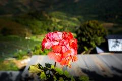 Rote und orange Blütenstaubblume auf dem Blumenstrauß lebendig lizenzfreie stockbilder